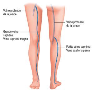 Le système veineux de la jambe