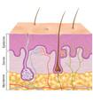 Ilustración capas de la piel