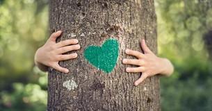 Drzewo z zielonym sercem