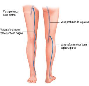 El sistema venoso en la pierna