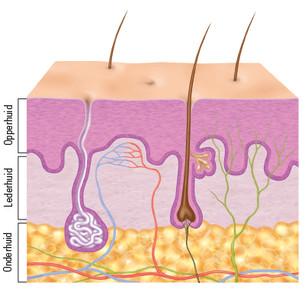 Afbeelding huidlagen