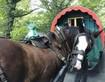 Julius on a horse