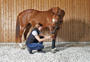 gniady koń ze stabilizatorami uciskowymi