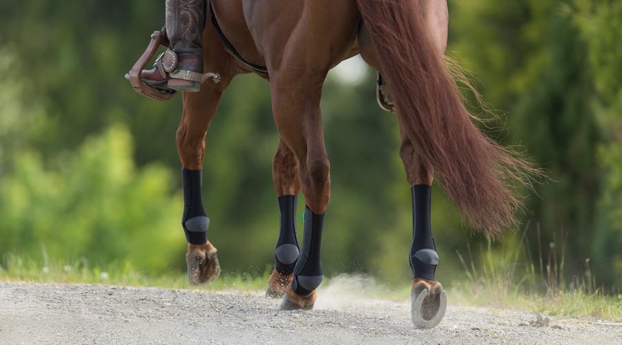 Paard met paardenbandages