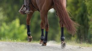 Las patas de un caballo