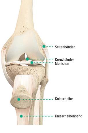Anatomischer Aufbau des Kniegelenks