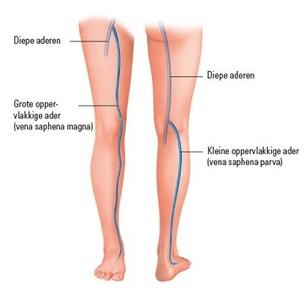 Het adersysteem in het been