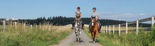 Koń ma założone stabilizatory dla koni