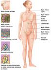 Układ limfatyczny człowieka – przegląd