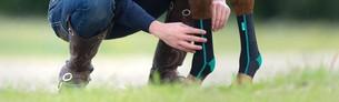 En hest med hestebandager