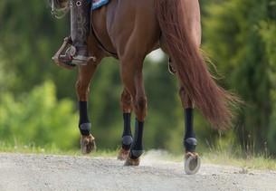 Brun hest med kompressionsbandager