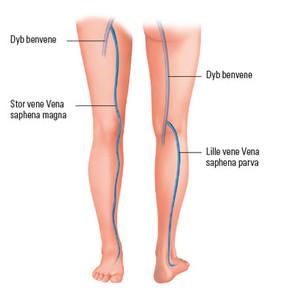 Venesystemet i benet