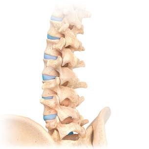 spine with hip bone