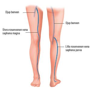 Vensystemet i benen